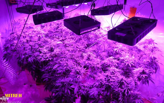 لامپ ال ای دی برای رشد گیاه