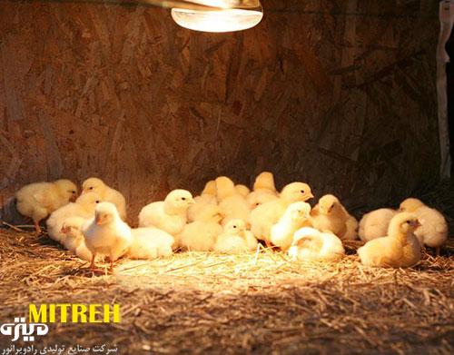 لامپ-حرارتی-مرغداری